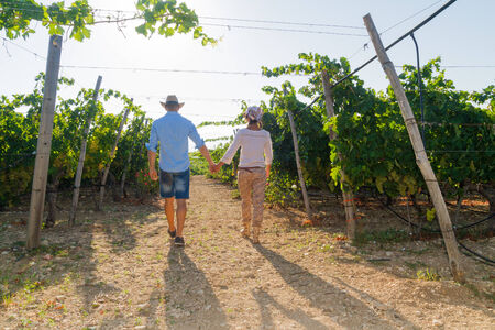 growers: Young couple, vine growers, walking through grape vines early in the  morning.