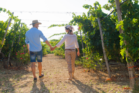 growers: Young couple, vine growers, walking through grape vines early in the morning