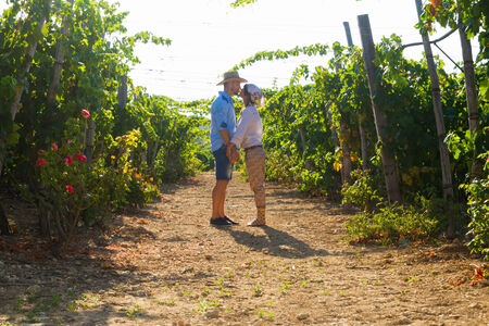 growers: Young couple, vine growers, hugging and kissing in the  grape vines early in the morning.