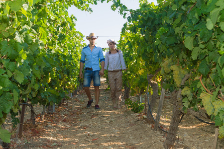 wine grower: Young couple, vine growers, walk through grape vines inspecting the fresh grape crop.