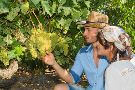 winemaker: Young couple, vine growers, walk through grape vines inspecting the fresh grape crop.