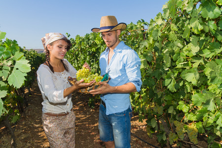 growers: Young couple, vine growers, walk through grape vines picking and eating grapes. Stock Photo