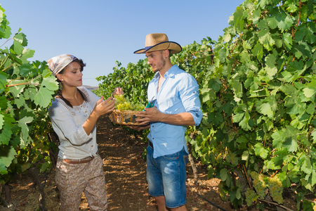 winemaker: Young couple, vine growers, walk through grape vines picking and eating grapes. Stock Photo