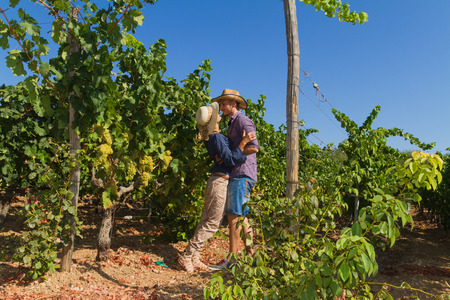 winemaker: Young couple, vine growers, hugging and kissing in the  grape vines. Stock Photo