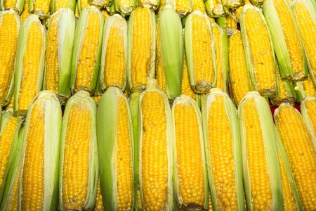 booster: Health booster high protein vegetable freshly harvested corn on an open air fruit market stand.