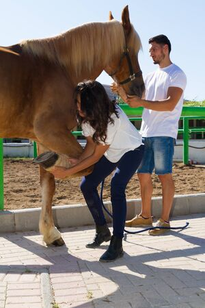 Young couple checks the hoofs of a brown female horse at the stables of a horse riding club, preparing it for a ride.