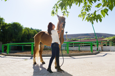 scrubbing: Attractive young woman grooming and scrubbing a horse at the stables.