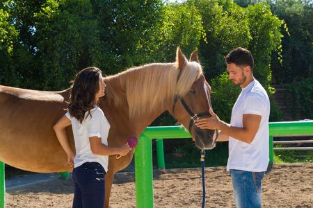 scrubbing: Young couple grooming and scrubbing a brown female horse at the stables of a horse riding club, preparing it for a ride. Stock Photo