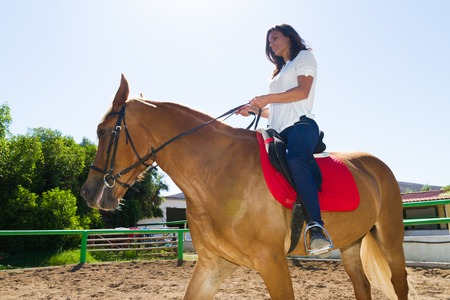 horse sleigh: Young brunette riding a brown-blond purebred mare in the riding club Stock Photo
