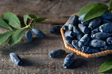 Honeysuckle ripe berries on a wooden table blue berry Stock Photo