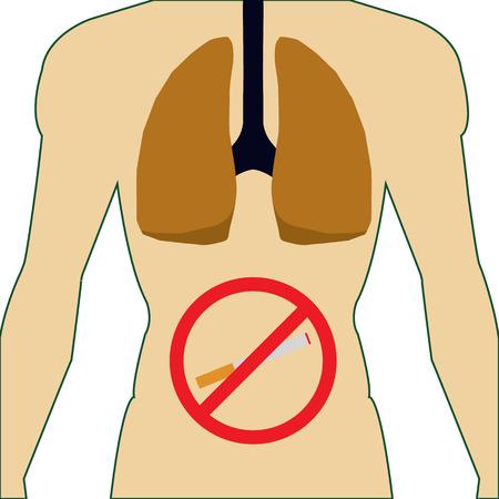 alveolos: Los pulmones del Sistema Respiratorio body.No smoking.No cigarette.Human humana