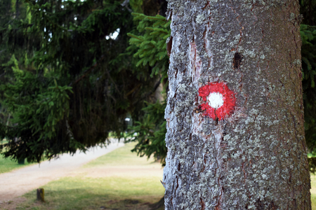 Hiking trail red and white circular mark on tree bark. Trail number one written underneath.Shallow dept of field effect.