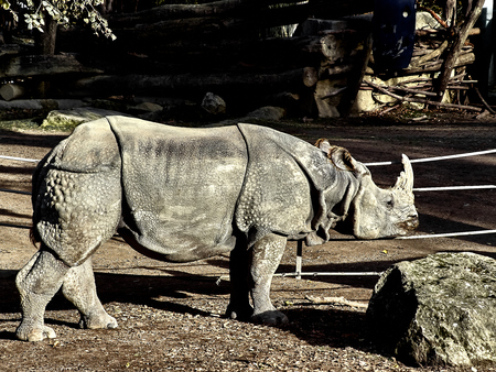 Shot of a rhinocheros at the zoo in a sunny day Stock Photo