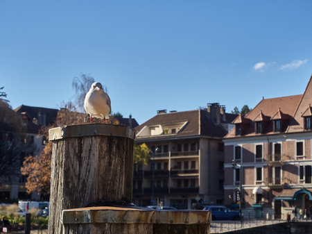 View of a little seagull on a dock, in the Thiou river, an effluent of the lake of Annecy. Standard-Bild - 117773192