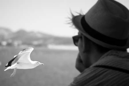 fantasize: watching a gull Stock Photo