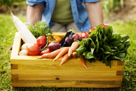 eating in the garden: Wooden box filled fresh vegetables