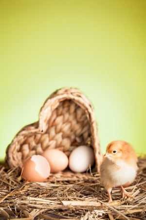 Springtime with birth of the small chicken  photo