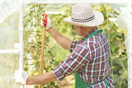 turn away: Adult man looking at his greenhouse Stock Photo