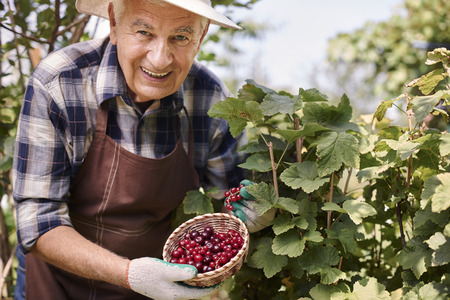 healthy person: Fresh currants have a lot of vitamins Stock Photo