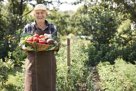 나의 정원은 나에게 많은 야채를 준다. 스톡 콘텐츠
