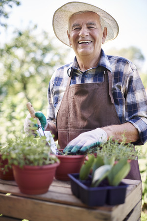 gardening gloves: Retired old man replanting flowers in the garden