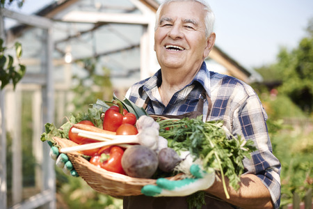 work gloves: Senior man proud of his crops