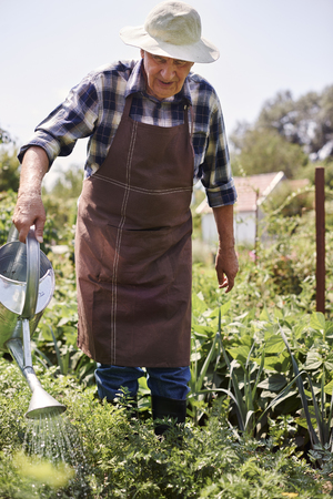 watering plants: Vegetables need a lot of fresh water