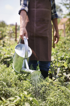 water garden: Plants need a lot of fresh water