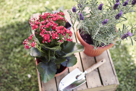 replanting: Replanting flowers in the garden in the summer Stock Photo