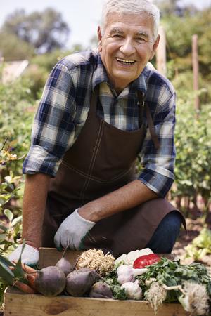 agricultor: Retrato de productor senior de vegetales org�nicos
