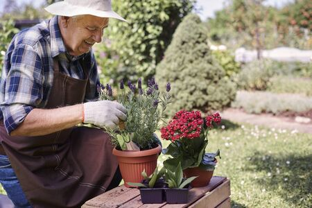 replanting: Senior man replanting flowers and herbs