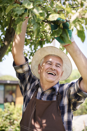 one man: Happy retiree picking up fruits from his garden