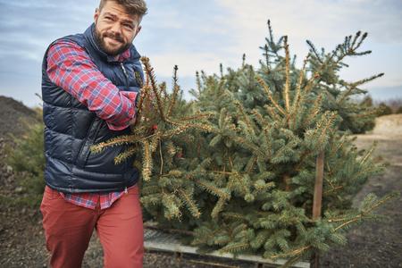 tree  pine: No es un trabajo f�cil