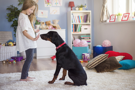 floor standing: Schooling a dog demands a lot of patience Stock Photo