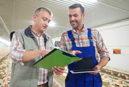 carne de pollo: Hombre que analiza el ingreso reciente en la granja