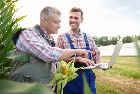 Crop plant examined by two farmers