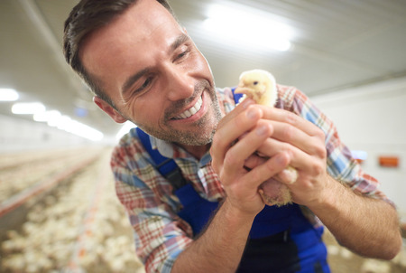 young farmer: Young farmer holding small chicken Stock Photo