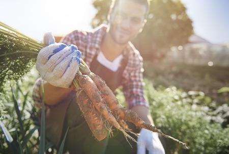 farm worker: Farm worker harvesting ripe carrots Stock Photo