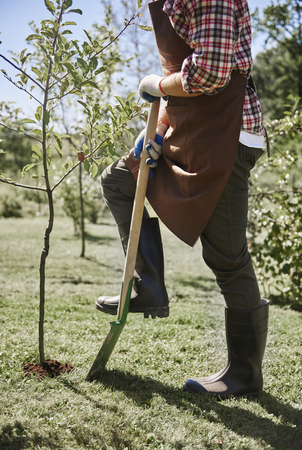 Man planting young tree in garden