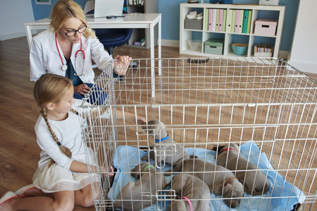 kneel down: Girl with puppies at a vet Stock Photo