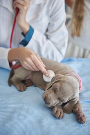 examined: Sleeping dog examined by the vet