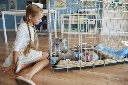 sitting down: Cage full of dog puppies
