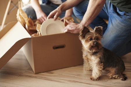 Vista superior de adorable perro y los propietarios en el fondo Foto de archivo - 70013282