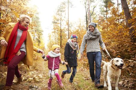 Autumn walk by forest path Banco de Imagens