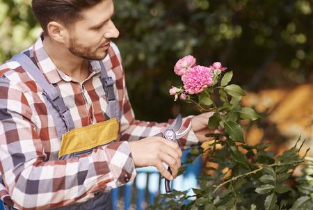 Gardener with pruning shears pruning flower