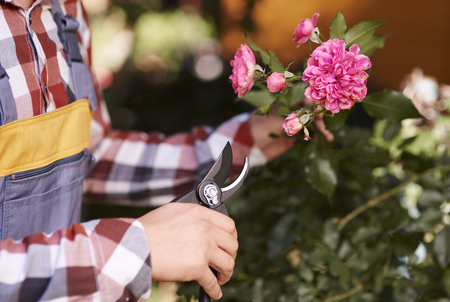 Male human hand pruning flower  Stock Photo