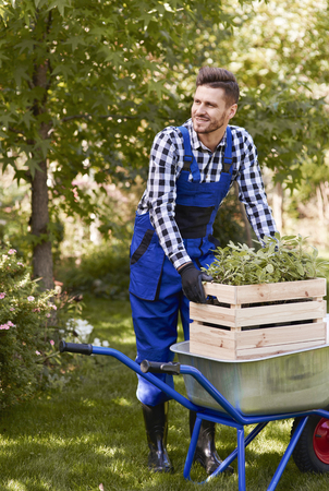 Gardener lifting wooden crate with seedling