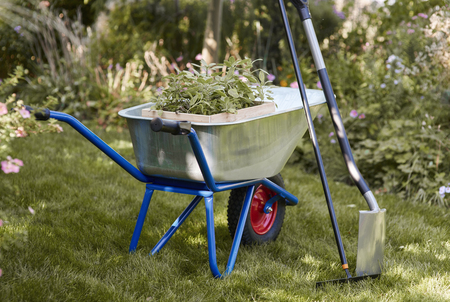 Shot of wheelbarrow with seedling, rake and shovel