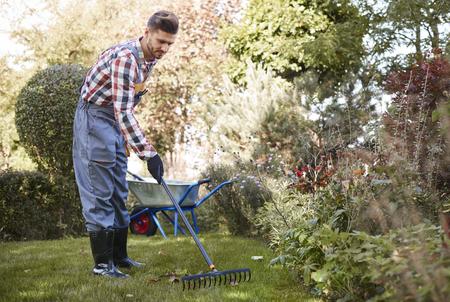 Foglie di rastrellamento del giardiniere nel giardino