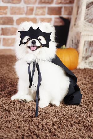 Shot of dog in superhero costume
